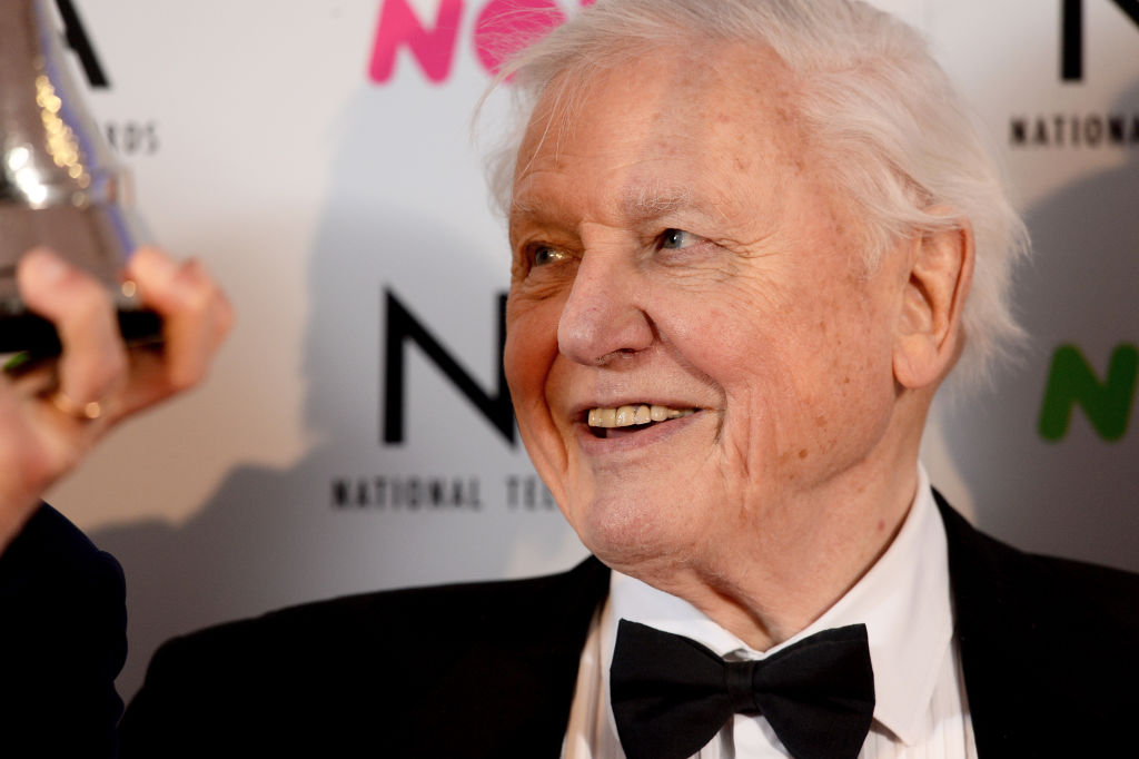 Sir David Attenborough slams BBC for not showing 'enough arts and culture'