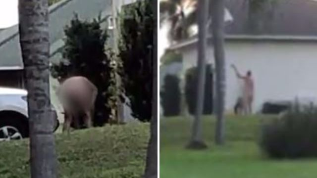 Cops allow nudist to garden in the buff as long as he doesn't touch himself