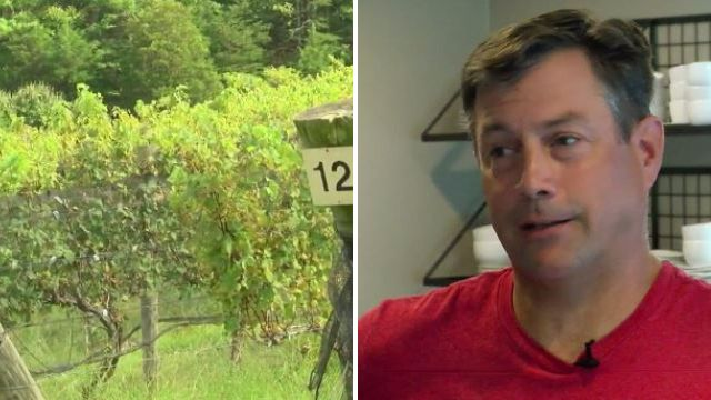 Winery owner wishes 'slow and painful death' on 'excrement' thieves who stole his entire harvest