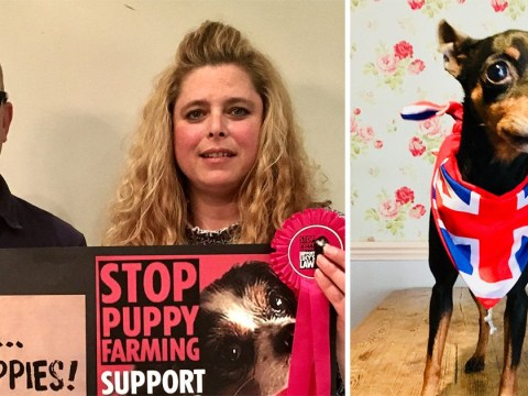 Anti-puppy farm campaigner's dog 'stolen in targeted theft'