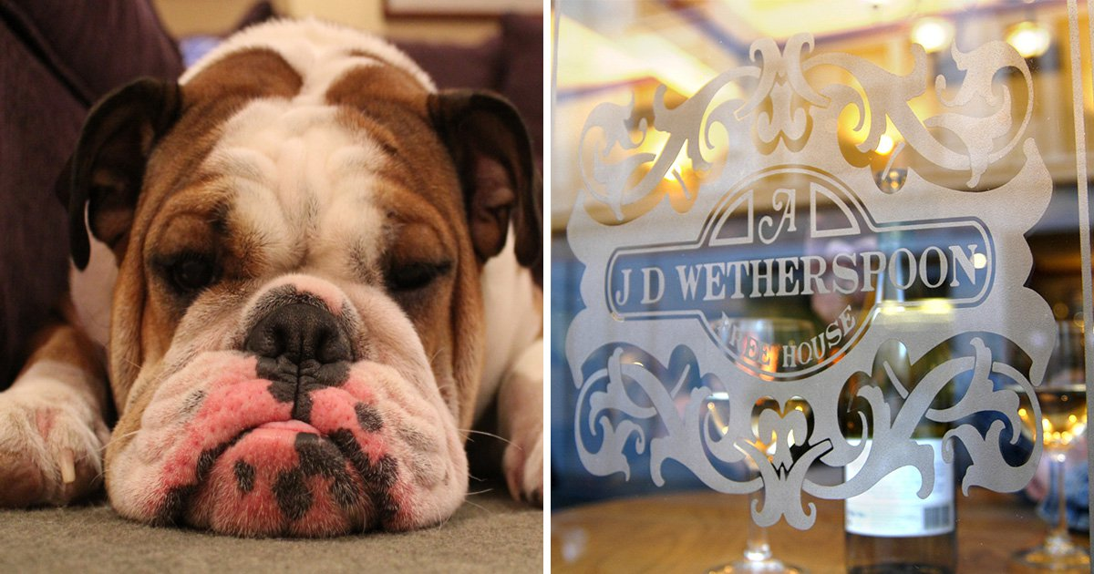 Wetherspoons to ban dogs from its 1,000 pubs