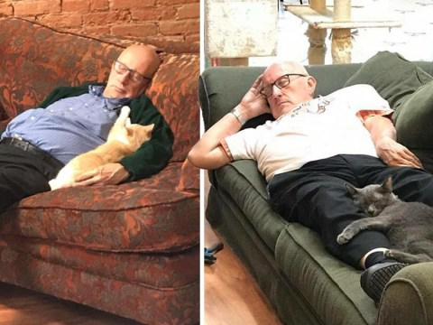Man, 75, pops into shelter every day and has a nap with cats