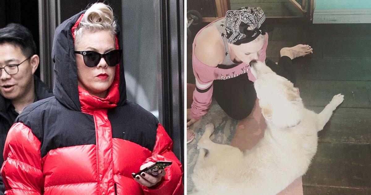 Pink shares heartbreak after her beloved dog dies
