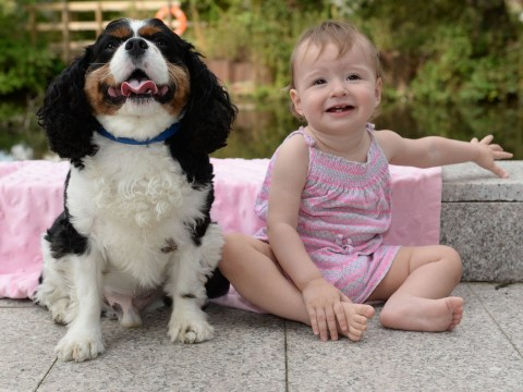 Dog saved one-year-old girl from choking to death as she slept