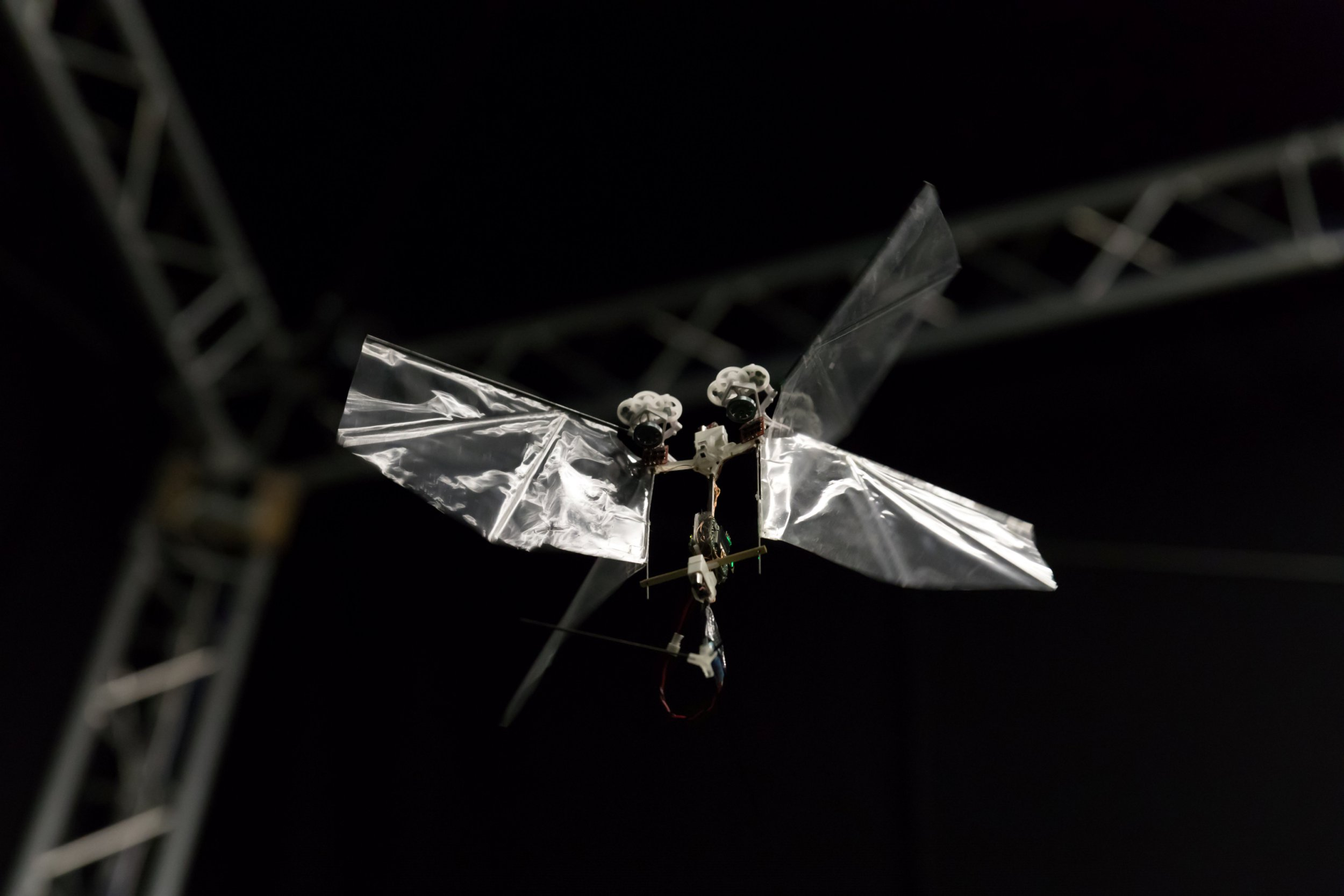 "The Delfly Nimble in flight. Embargoed 19:00 BST Thursday (13-SEP-2018 14:00 ET) A flying robot with flapping wings that can dart through the air like an insect has been unveiled by scientists. See story NNROBOT. It can hover, dart left or right and even do a loop the loop or barrel roll. Like a real insect, the wings beat at 17 times per second to provide lift and can speed along at over 15 miles an hour. Developed by Dutch scientists, DelFly Nimble is based on the fruit fly and promises to revolutionise drone design and our understanding of insect flight. The first autonomous, free-flying and agile flapping-wing robot was developed by TU Delft researchers from the Micro Air Vehicle Laboratory (MAVLab), in collaboration with Wageningen University & Research. It is so far unmatched in its performance, and yet has a simple and easy-to-produce design. Its flapping wing not only generate the lift force needed to stay airborne but also control the flight via minor adjustments in the wing motion. The control mechanisms have proved to be highly effective, allowing it not only to hover on the spot and fly in any direction but also be very agile like the fruit fly despite being more than 55 times larger. First author and main designer of the robot Dr Matej Karasek said: ""The robot has a top speed of 25 km/h and can even perform aggressive manoeuvres, such as 360-degree flips, resembling loops and barrel rolls."