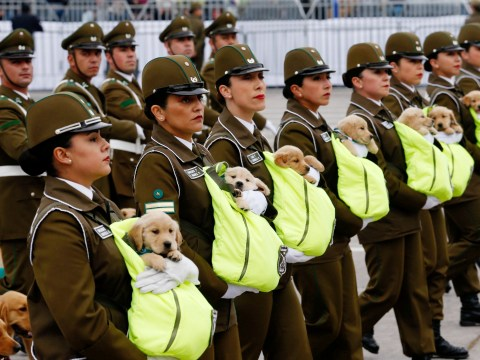 Police pups at Chile's annual military parade have stolen our hearts