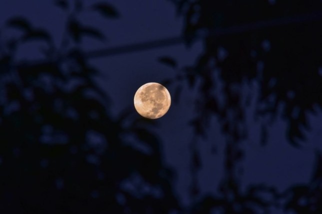 Full Moon on Friday 13th: Incredibly rare Harvest Moon not seen for 30years peaks tonight