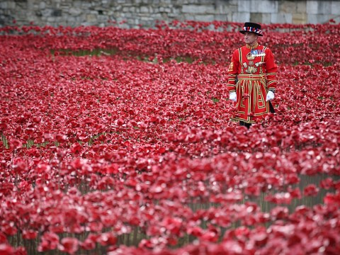 What dates are the Tower of London poppies on display?