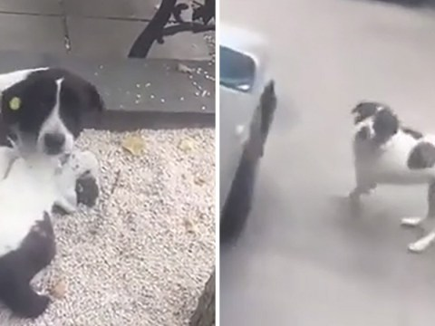Man reunited with dog after it went missing three years ago
