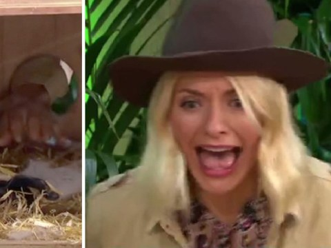 Holly Willoughby left screaming as she takes on bushtucker trial ahead of I'm A Celebrity