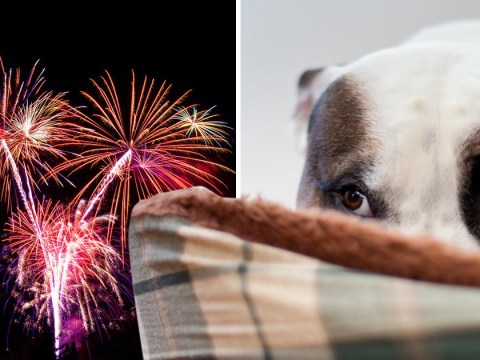 Anxiety hotline for dogs launches for Bonfire Night