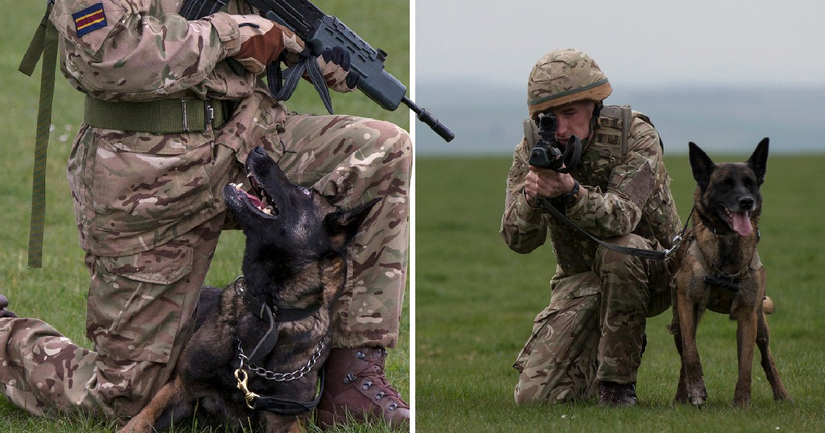 Military dogs put down for being 'unfit for service' when they could have been pets