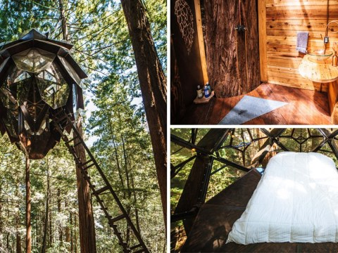 A live-in pinecone-shaped treehouse is now up for sale