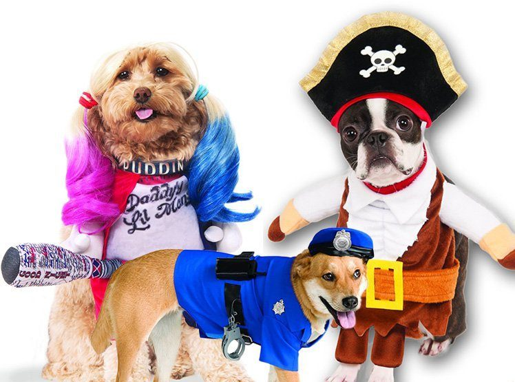 Don't forget your dog costumes this Halloween