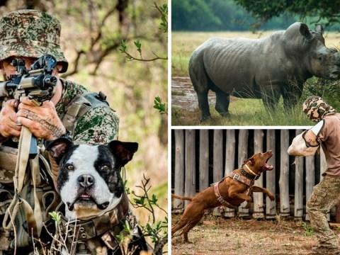 How anti-poaching dogs are helping to save endangered rhinos in South Africa
