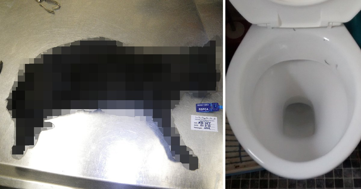 Woman spared jail after drowning pet cats in the toilet