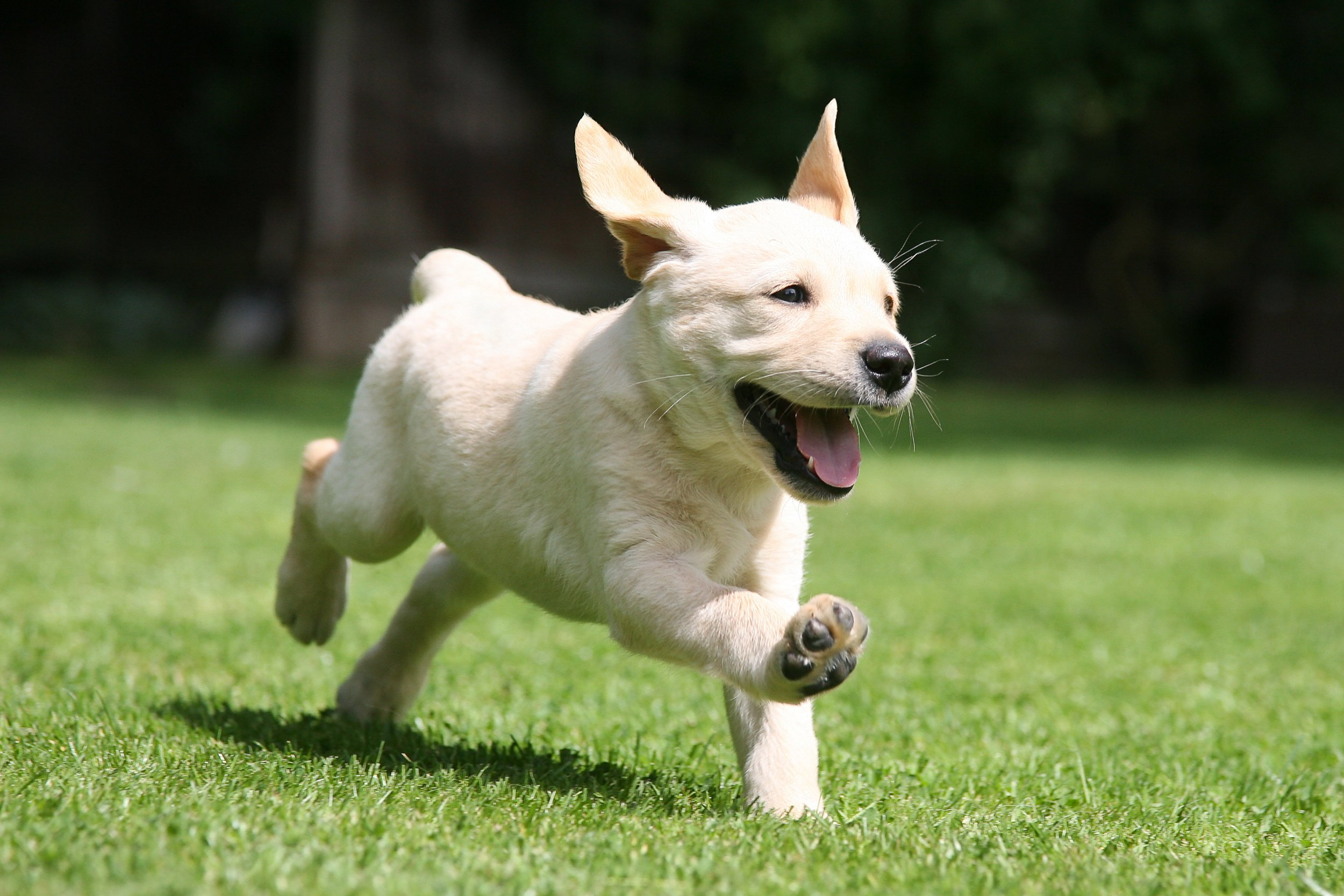 Young dogs can benifit from having an adult around.