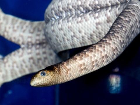 British man dies after being bitten by sea snake in Australia