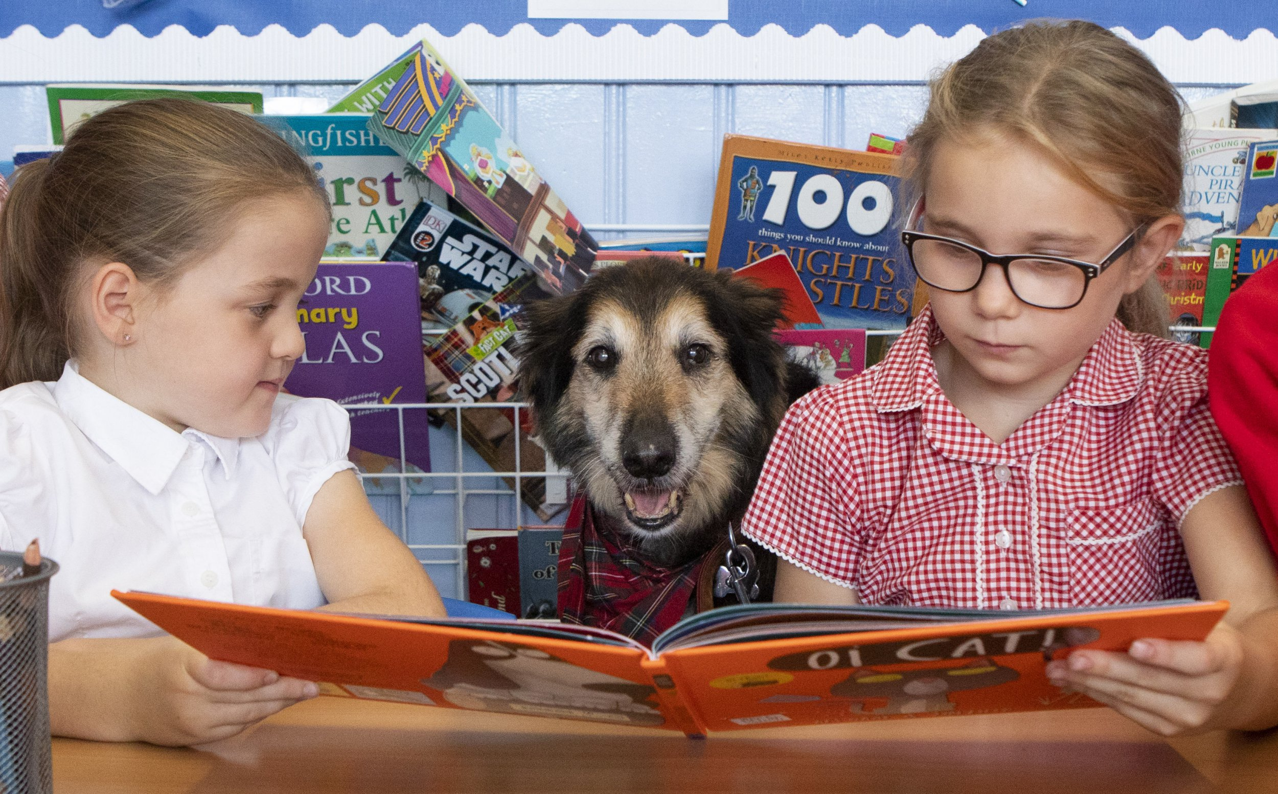 Russell the Dog, 13, listening to school children read at Coalsnaughton Primary School. Russell visits the children of Coalsnaughton Primary School in Alloa, Clackmannanshire every Friday to listen to the children read and take part in the ?daily mile? walk. October 5 2018.See story SWSCdog.This adorable pooch is all ears as he helps primary school pupils learn to read - and even has his own school uniform and backpack. Rescue dog Russell, aged 13, is always met with an adoring audience when he visits Coalsnaughton Primary School, Alloa, Clackmannanshire on a Friday afternoon. The elderly dog is the family pet of school worker Kelsie McAlpine, 25, who came up with the idea of bringing him in to meet the children. Kelsie researched the benefits of children having contact with animals, and said she has seen pupils? confidence soar since Russell first visited the classroom in February.