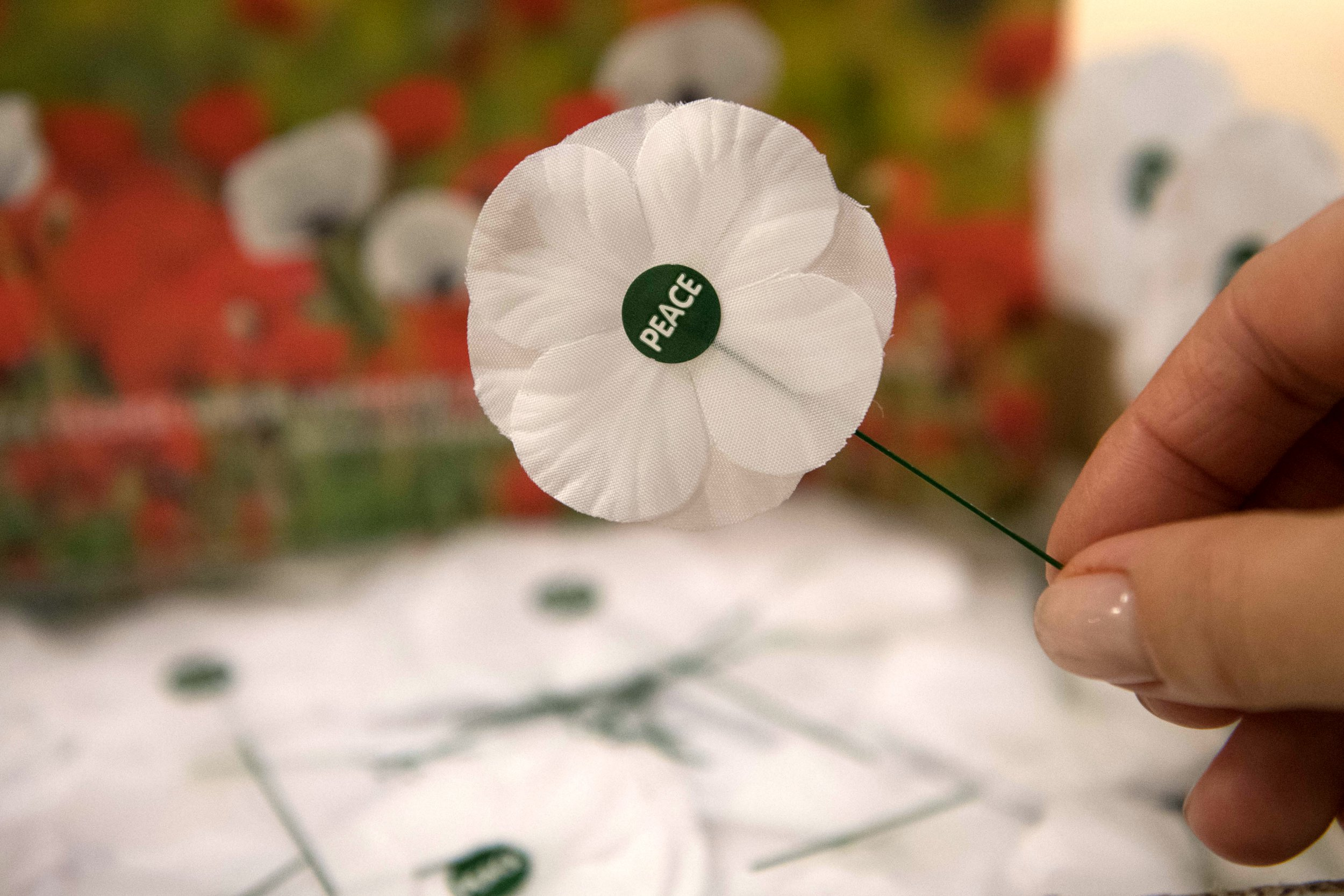 My white poppy doesn't mean I'm against remembrance, it means I am committed to peace
