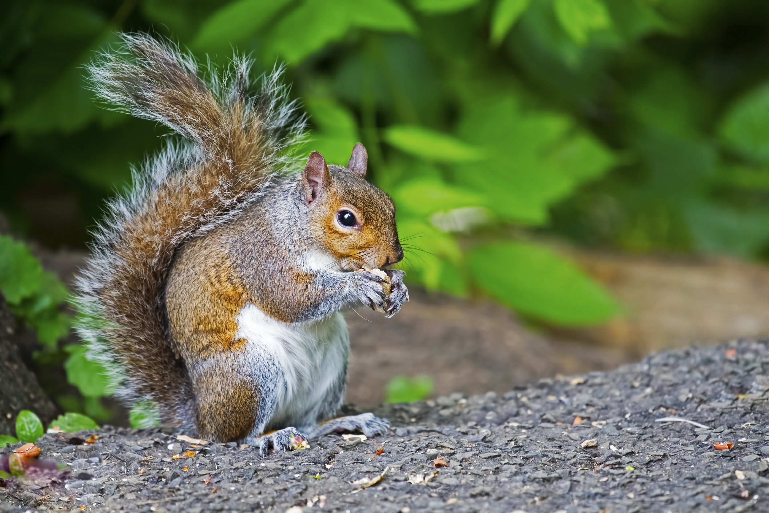 Hunter died of mad cow-like disease after eating squirrel's brain