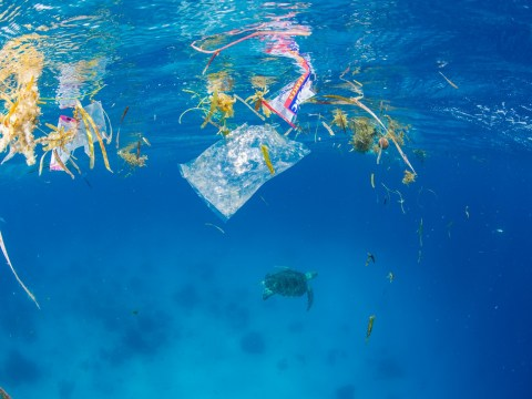 There's probably plastic in your poo from sea pollution