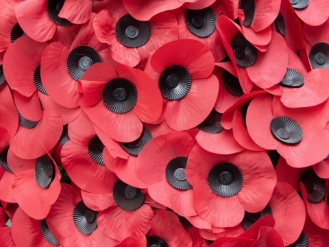 Why are poppies a symbol of remembrance?