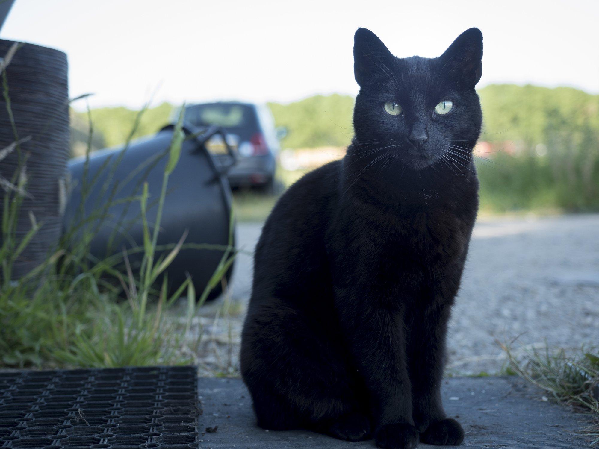 Here\u0027s why we celebrate National Black Cat Day