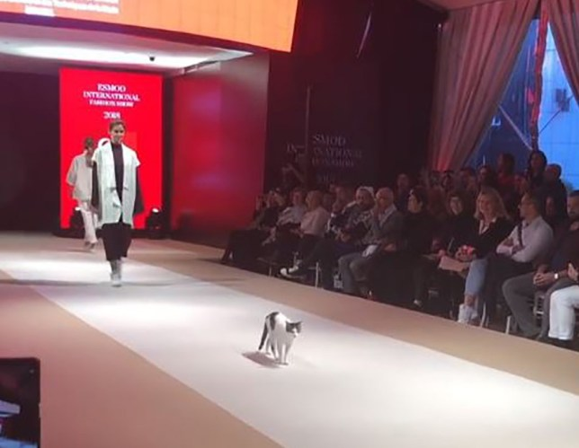 METRO GRAB INSTAGRAM Actual Cat Walks the Catwalk in Turkey and Paws at the Models https://www.instagram.com/p/BpW_NfWn4ub/?utm_source=ig_embed&utm_medium=loading