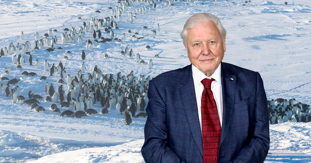 David Attenborough defends Dynasties crew who broke golden rule of intervention to save penguins