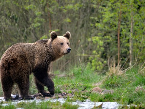 Bears, wolves, stags and more: Exploring the wilder side of Romania's Calimani National Park