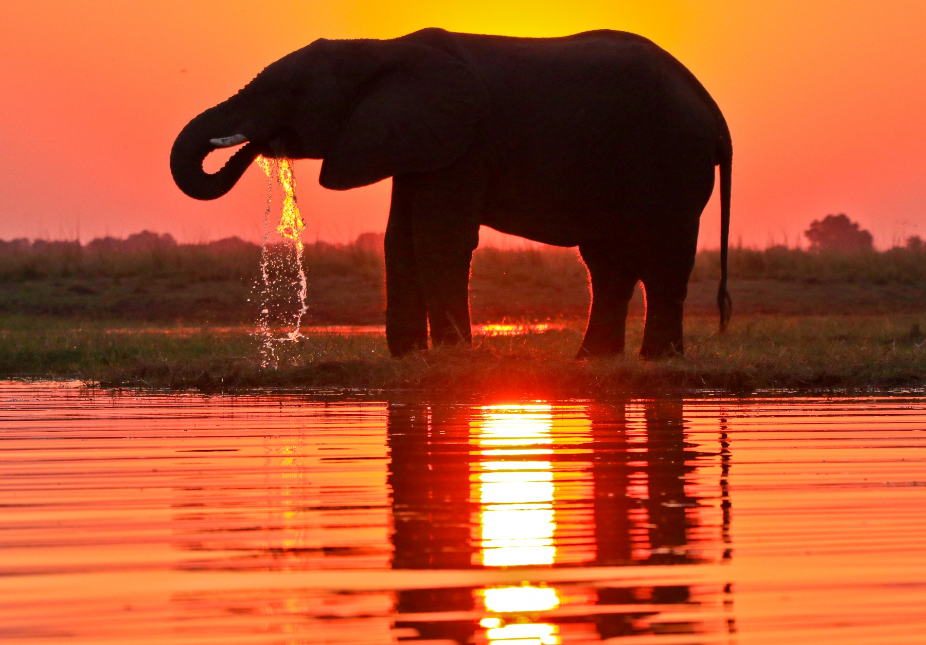 A photo safari to Botswana makes for a truly unforgettable journey of a lifetime