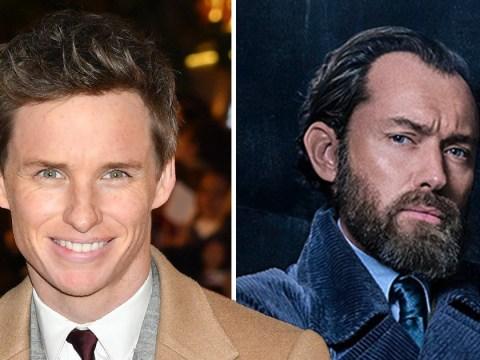 Eddie Redmayne admits people were shook by Jude Law's Dumbledore beard on Fantastic Beasts set