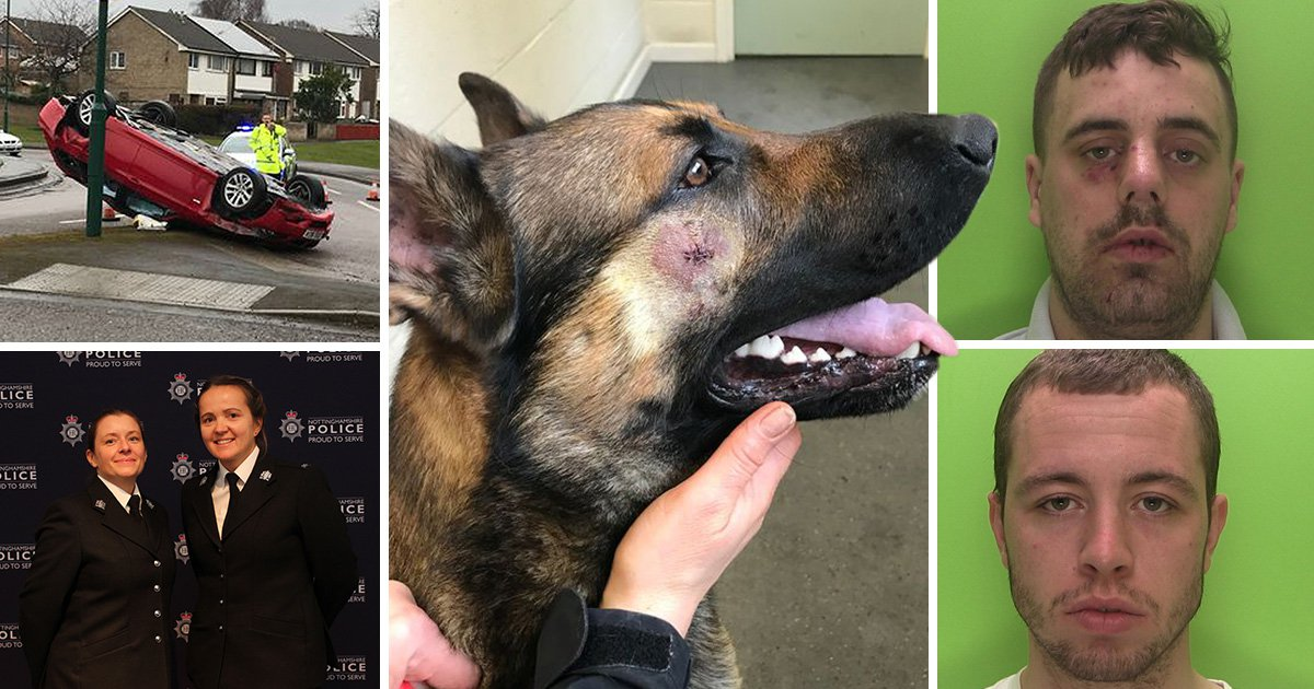 Police dog stabbed in the face by men escaping crashed stolen car