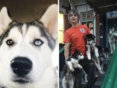 Pete Doherty's pet Huskies accused of killing neighbour's cat in 'savage' 10-minute attack