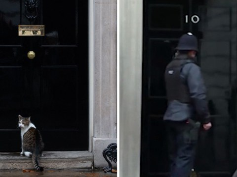 Most British video ever shows policeman knocking on door of Number 10 for a cat