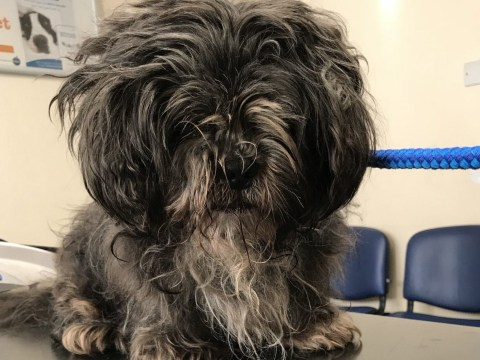 Elderly dog covered in faeces dumped with fur so matted he couldn't walk