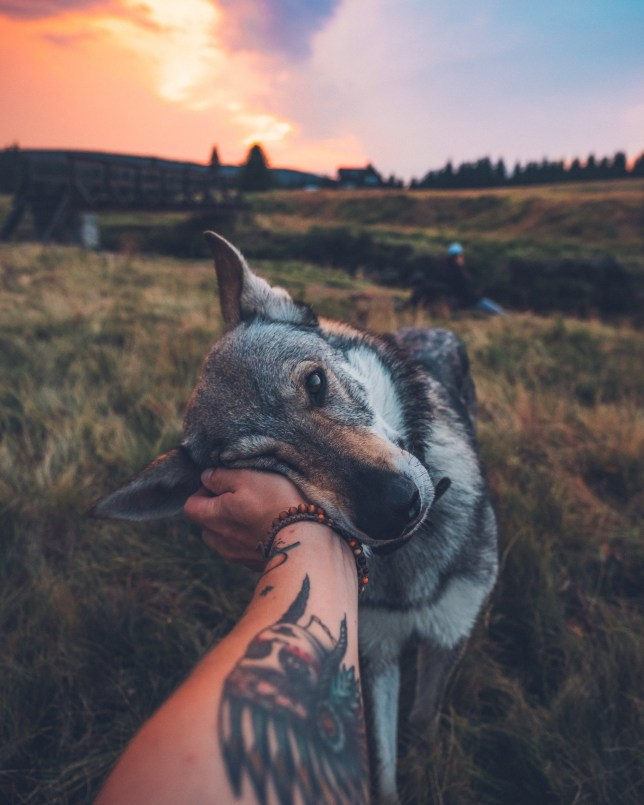 Honza ??eh????ek pets his Czechoslovakian wolfdog named Sitka in the Czech Republic. See SWNS copy SWCAdog: An instagrammer has captured thousands of hearts with his photos of him petting his dog in stunning locations. Czech photographer Honza ??eh????ek says he loves travelling but cant do its without his best buddy Sitka a Czechoslovakian wolfdog who tags along everywhere. The four-year-old dog, named after an Alaskan city has travelled throughout the Czech Republic with Honza, and helped him amass a an enormous 300,000 instagram followers.