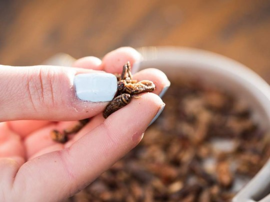 Sainsbury's to start selling insects to eat from Monday Credit: Eat Grub