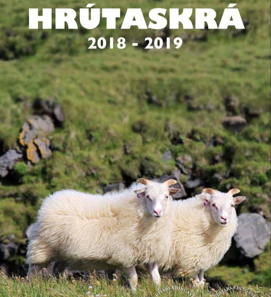 Iceland has published an illustrated guide to the country's most eligible rams, ahead of the next breeding season. https://www.rml.is/static/files/RML_saudfjarraekt/kynbotastarf/hrutaskra/hrutaskra_2018-19_vef.pdf?fbclid=IwAR2LjZV4CHHgkz5o_ZfFaTe7Jfu0pWSWnC0cOrNMTsO8wi3hJytIkV9myFs