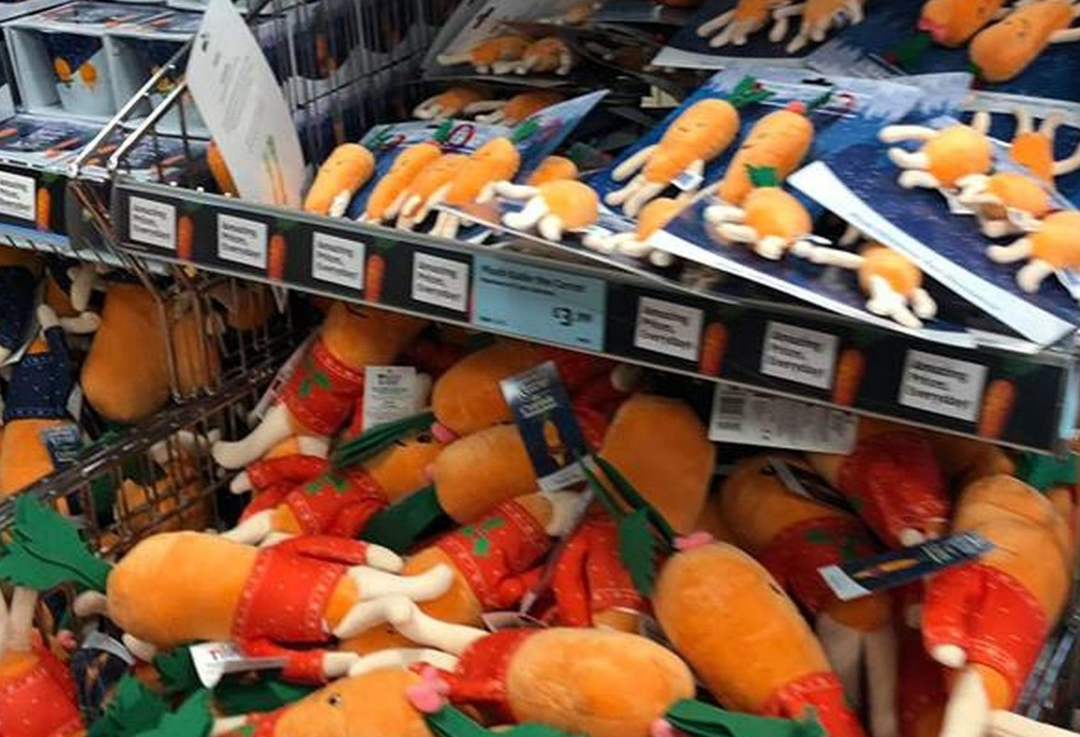 PIC FROM Kennedy News and Media (PICTURED: HUGE STOCK OF KEVIN THE CARROT TOYS ON SALE IN ALDI) Families have been queuing since 6am outside Aldi stores this morning [THURS] to get their hands on the Kevin the Carrot toy range - with some splurging HUNDREDS of pounds. Despite only being released today, the highly sought-after toys have been being flogged on eBay for more than ??100 for days - prompting some shoppers to claim it must be staff selling them for profit. Dad Matthew Ross queued from 6.30am in the cold with his family of five to get secure a set of the toys each, which saw them splash ??124 in minutes. SEE KENNEDY NEWS COPY - 0161 697 4266