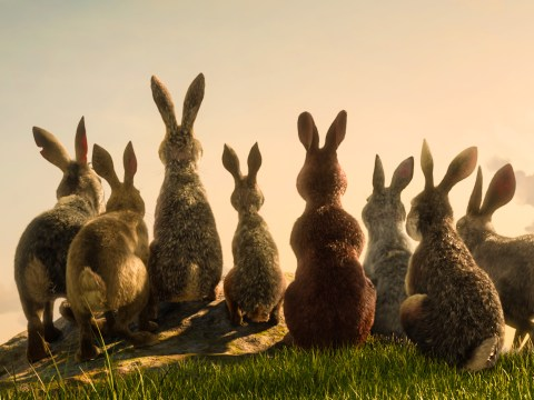 When is Watership Down on BBC One and who is in the cast?