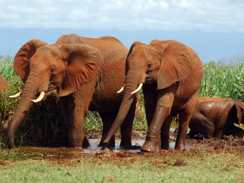 20,000 elephants a year are killed for their ivory. The UK has had enough