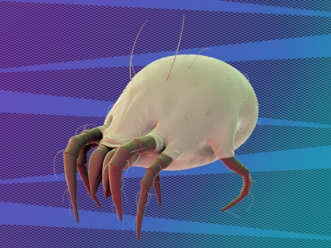 Keep sneezing? There might be dust mites hiding out in your bed