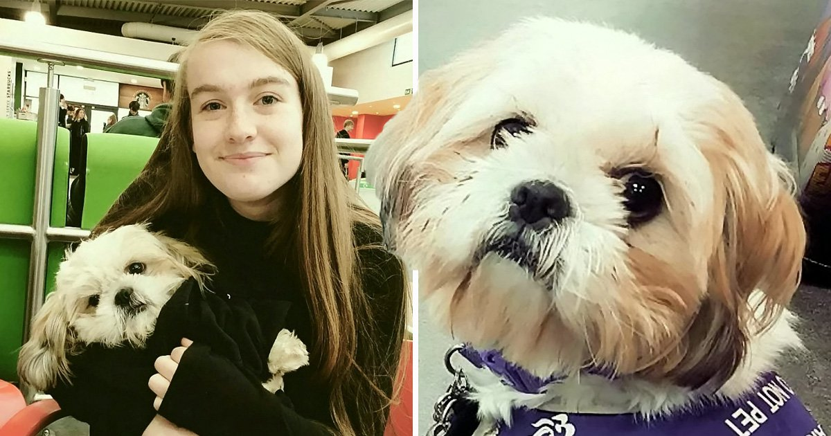 Autistic girl 'traumatised' after cafe calls police over her assistance dog