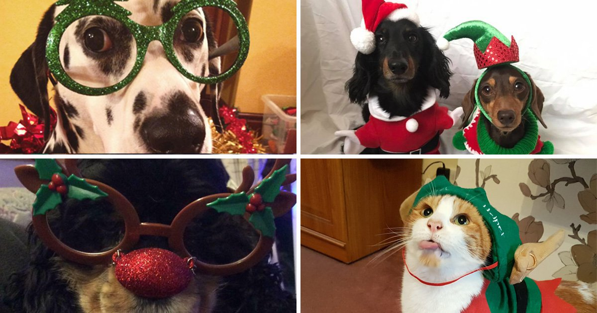 These pictures of Britain's most festive pets are adorable