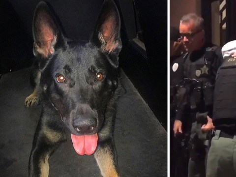 Hero police dog killed while trying to take down murder suspect on Christmas Eve