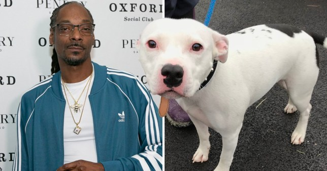 Snoop Dogg offers to adopt abandoned dog Snoop after RSPCA rescue