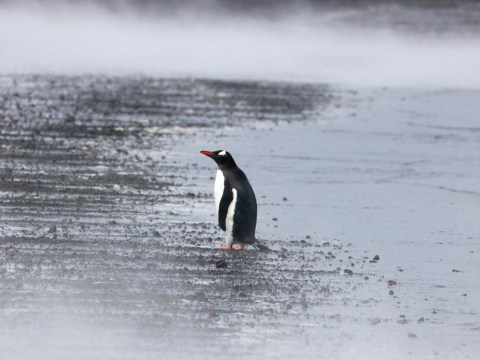 Would you dare to swim inside the icy waters of an active volcano in Antarctica?