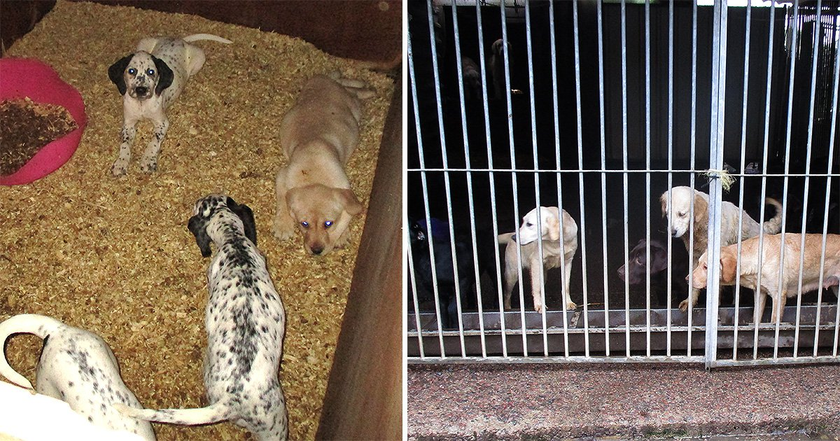 Dad-of-three who sold 'conveyor belt' dogs from puppy farm jailed